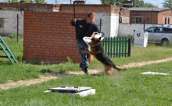 Собачьи Знакомства В Курске
