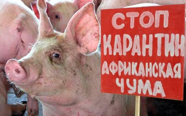 АЧС вКурскую область угодила сукраинским салом