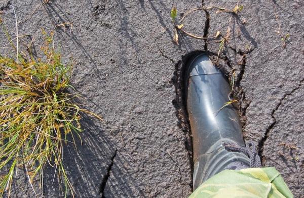 ВКурской области 84-летняя пенсионерка практически сутки провела «вплену» болота