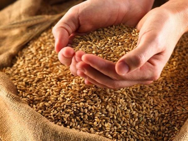 Курская область— селянин похитил зерно насельхозпредприятии