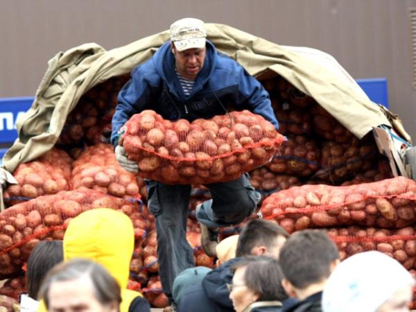ВКурске состоятся ярмарки выходного дня