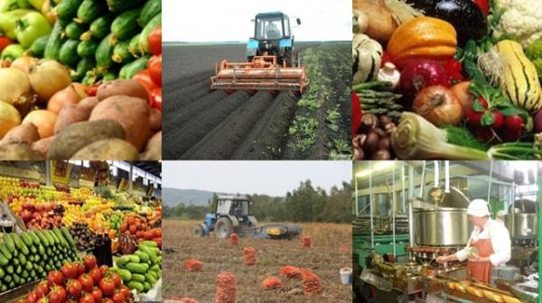 Краснодарский край признан лидером пообъему производства сельхозпродукции в 2016-ом