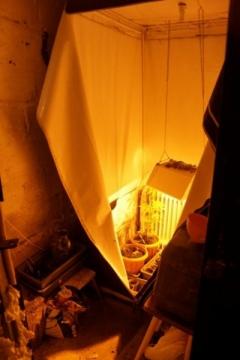 44-летний курянин выращивал усебя вгараже коноплю