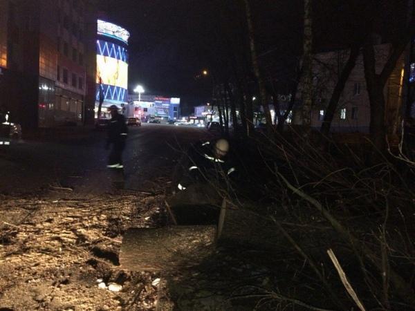 В центре Курска за день упали два дерева