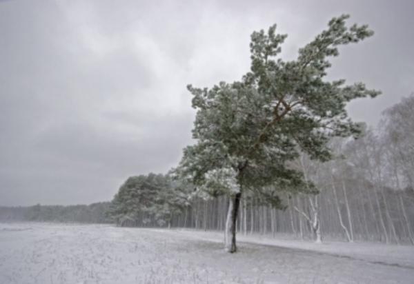 МЧС предупредило ометели исильном ветре вСмоленской области