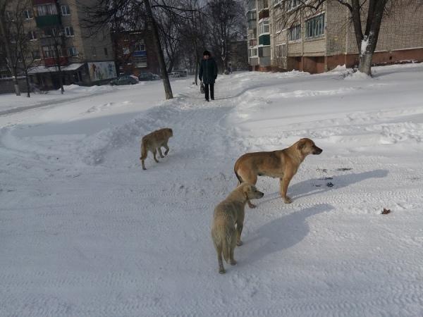 В Курске на школьницу набросились бродячие собаки