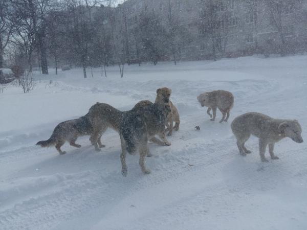 В Курске начинают отлов бродячих собак
