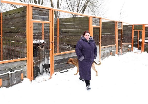 На отлов и содержание бездомных животных направят более 5 миллионов рублей