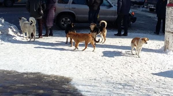 В Курске из-за бешеной собаки вакцинировали сотню животных