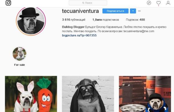 Бульдог из Курска собрал в Instagram  почти 2 миллиона подписчиков