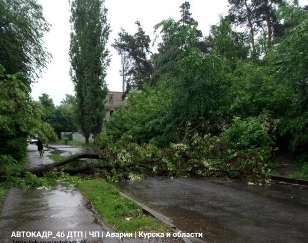 В Сеймском округе рухнули два дерева