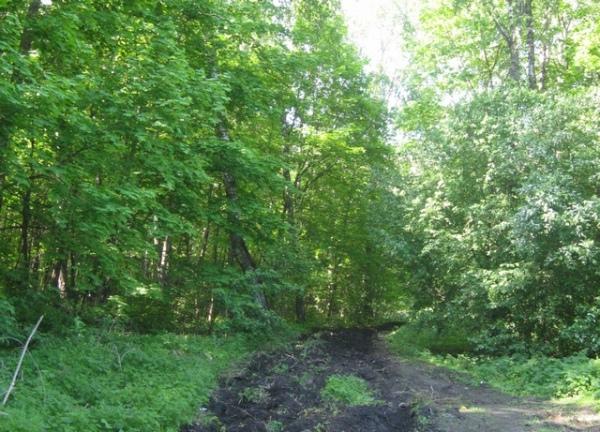 Курянин выращивал плантацию конопли в лесу