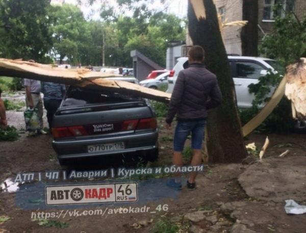 Ветер повалил дерево на два автомобиля