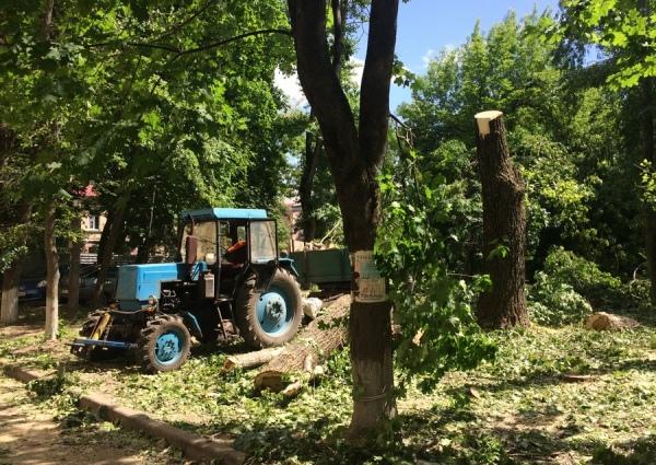 Курянам разрешили самостоятельно рубить деревья во дворах