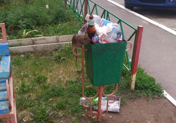 Жители проспекта Клыкова жалуются на нашествие крыс