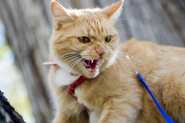 В Дьяконово ребенка укусил бешеный кот