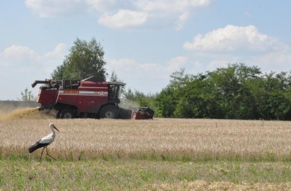 По сбору зерна Курская область уступила только Кубани