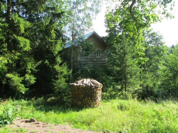 В Курской области закон о лесной амнистии применялся 101 раз