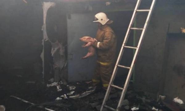 В курском селе из пожара огнеборцы спасли двух поросят и двух коз