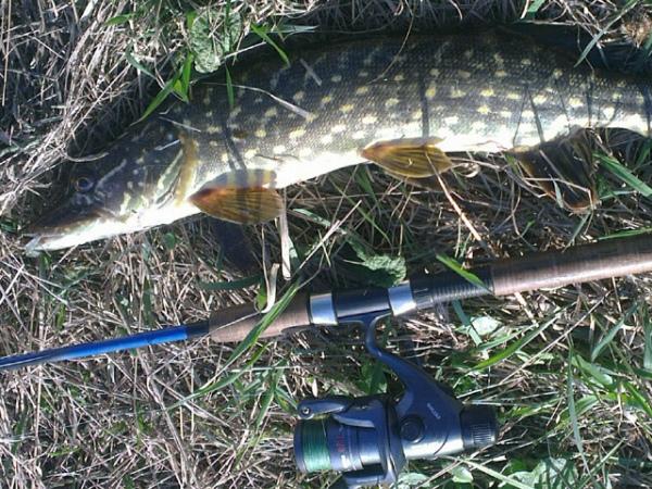 где можно ловить рыбу на реке или