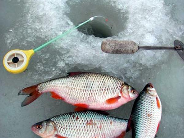 Свапское (Железногорское) водохранилище отдых рыбалка