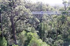 Чтобы сохранить леса, австралийцы придумали экскурсии по кронам деревьев