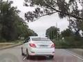 Под Курском огромный тополь рухнул на дорогу