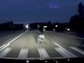 Под Курском машина сбила насмерть мужчину с собакой (18+)